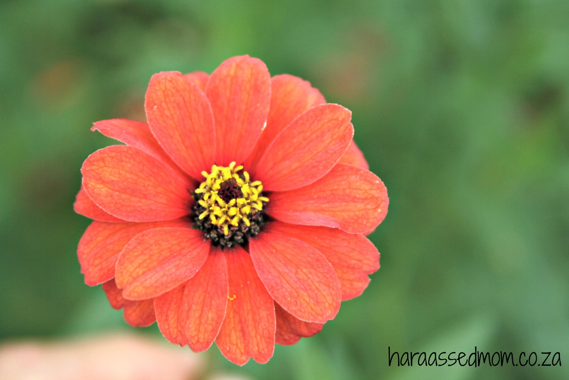 #embracehappyflower