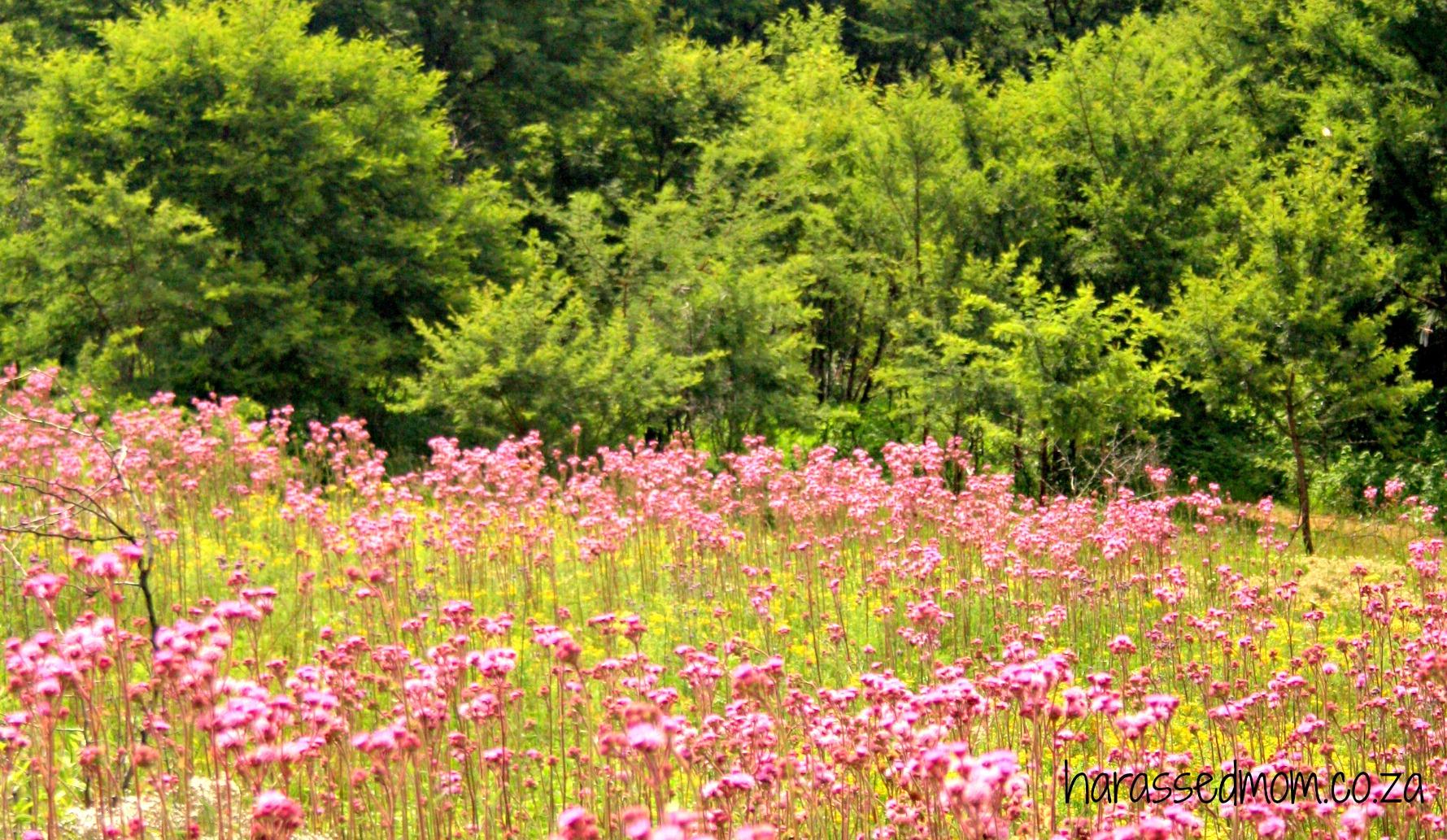 #embracehappyflowers