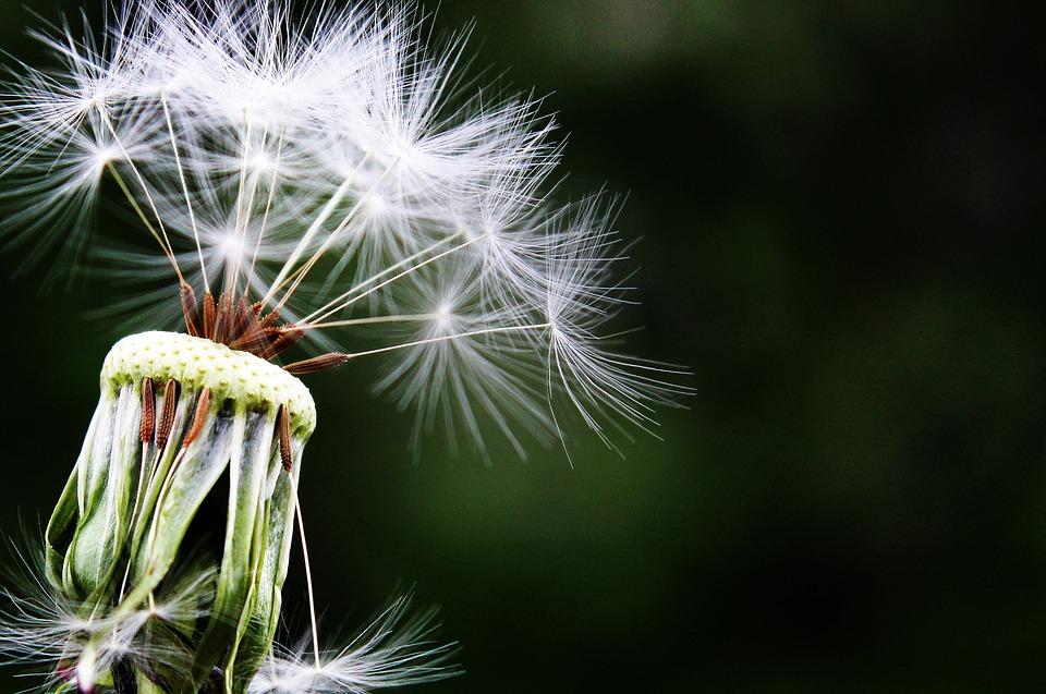 Allergies|HarassedMom